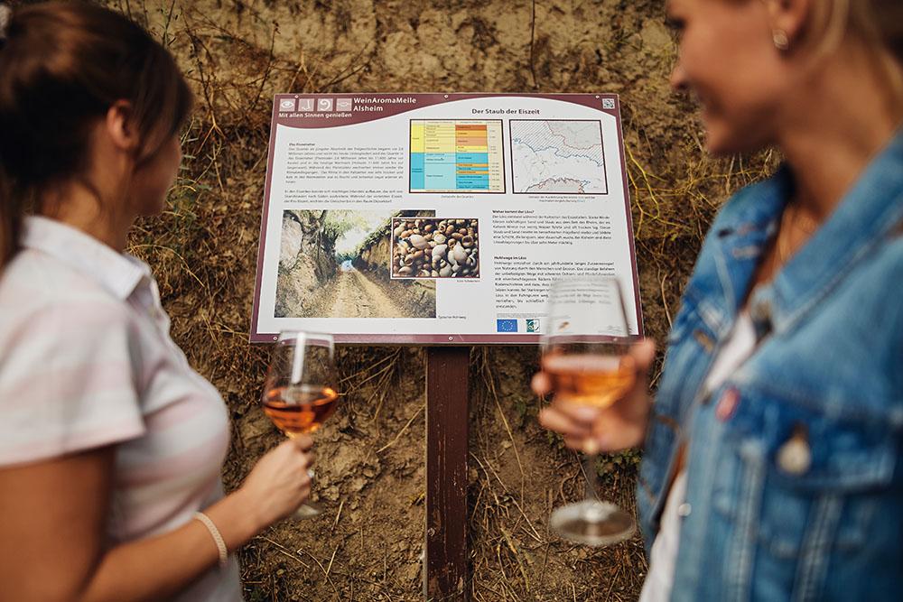 Infos zur Alsheimer Weinwanderung
