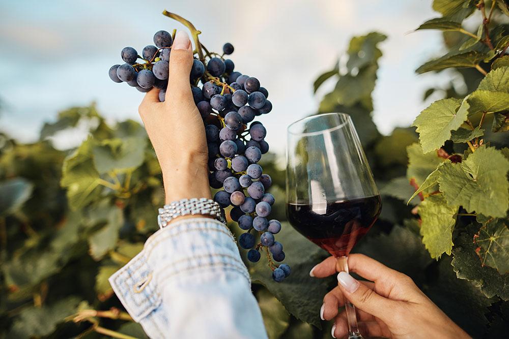 Anreise zur Weinwanderung Alsheim